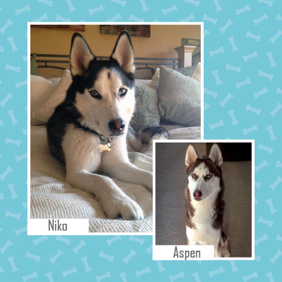 Dogs - Niko and Aspen